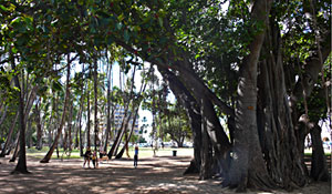 Trees in Kapiolani Park behind Queens Beach & Sans Souci Beach