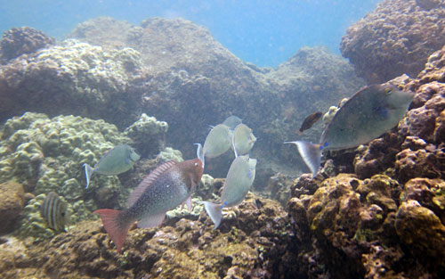 Snorkeling with a mixed school of fish in the coral reef at Three Tables
