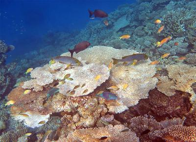 Coral Reef and many fish