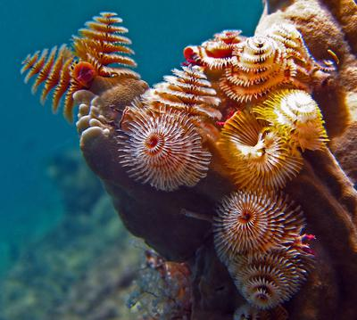 Christmas Tree Worms @ Tugboat