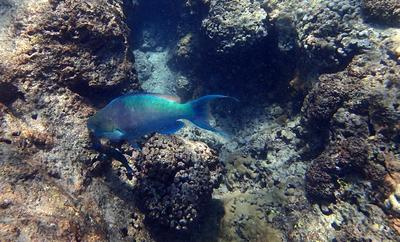 Beautiful Parrot Fish