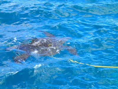This was a really large turtle we spotted just as we were headed back