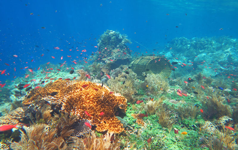 Incredibly alive reefs full of corals, fish and other creatures await you snorkeling in Alor.