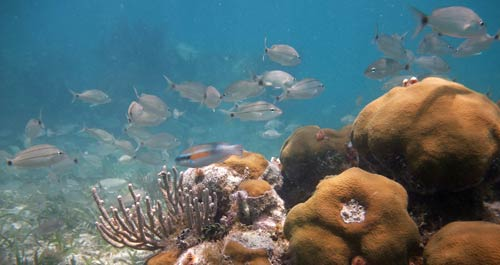 What you can see snorkeling Florida Keys
