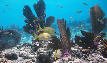 Small reef fish and sea fans at Alligator Reef