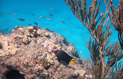 Looe Key Fishes and Soft Coral