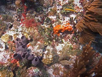 Nice sponges and soft corals