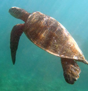 You can see turtles while snorkeling at Tunnels.