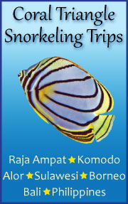 Check out the wonderful Coral Triangle snorkeling trips currently on offer.