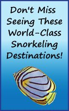 Check out these world-class group snorkeling trip destinations.
