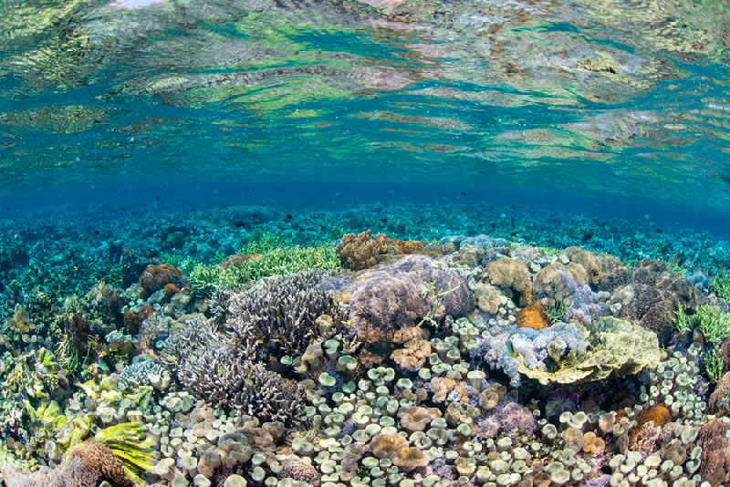 Snorkel colorful alive reefs like this one on this Komodo Resort Snorkeling Trip.