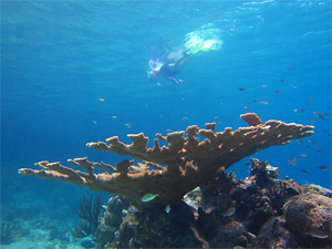 Wide Angle Snorkeling Shot