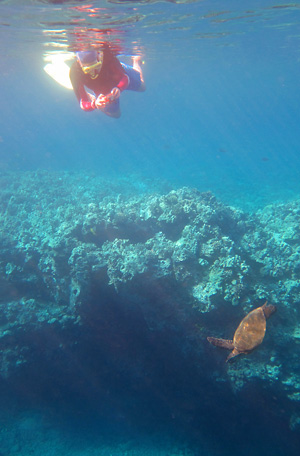 Nicole and a Green Sea Turtle - Hawaii