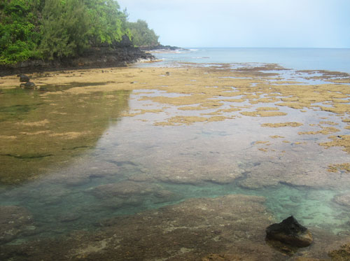 The reef you must get outside of to see the turtles at Sealodge Beach