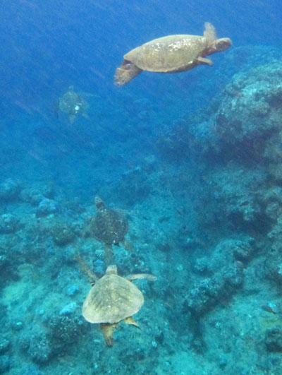 We snorkeled at Sealodge Beach with the most turtles ever.