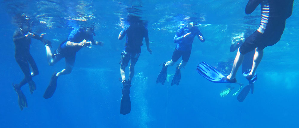 These headless snorkelers are demonstrating that there are many choices in snorkeling fins.