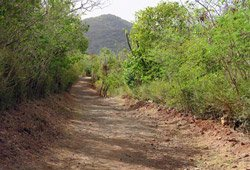 Salt Pond Bay Trail - About 1/4 mile long downhill