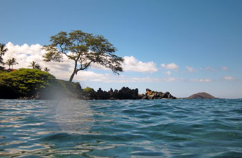 Snorkel off shore of this tree to see healthier reef past the left end of Wailea Beach.