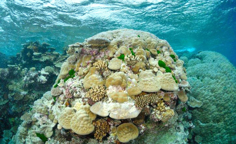 Snorkel amidst pristine untouched reefs on the Great Astrolabe Reef in Fiji.
