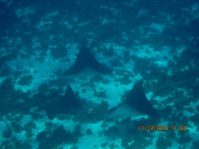 Eagle Ray formation, Rum Point