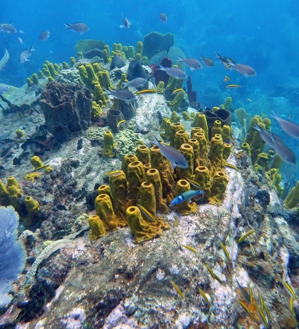 A reef shot we took with our Fuji XP140 in St. Lucia.