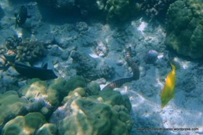 Fishes Eels And Cs At Kahalu U Beach