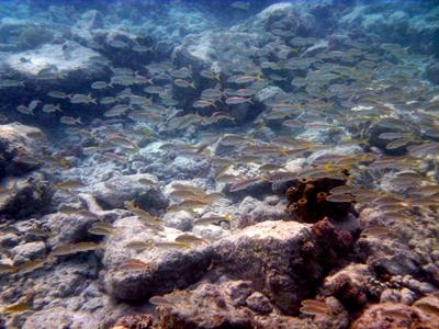 Schools of fish along the reef