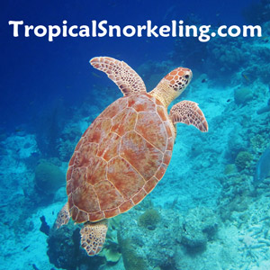 Best Snorkeling in Hawaii - Our Favorite Islands and Spots